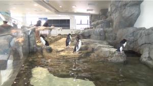 一番最後にもペンギンが見れます